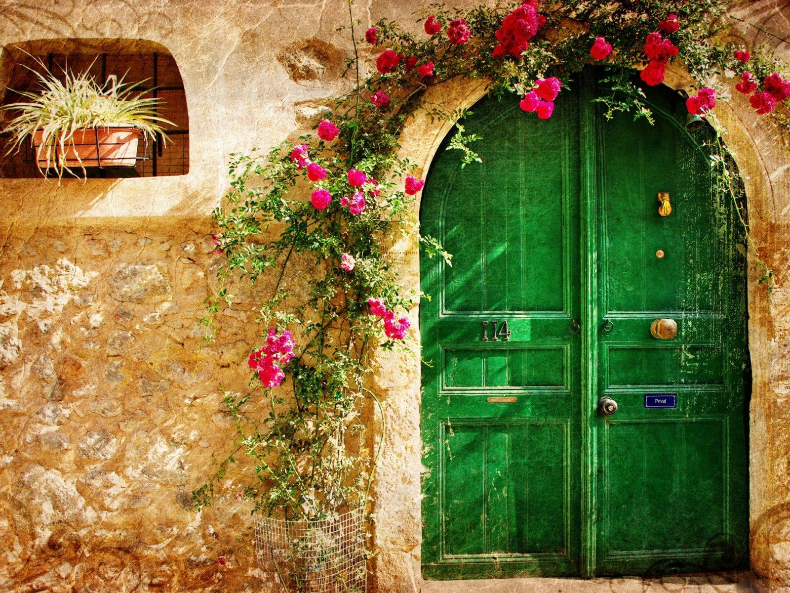nature beauty flower beautiful rose door green wallpaper
