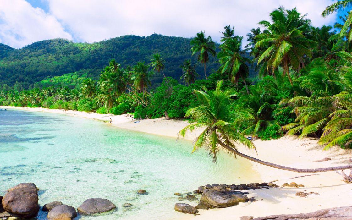 playa tropical palmeras arena blanca mar wallpaper