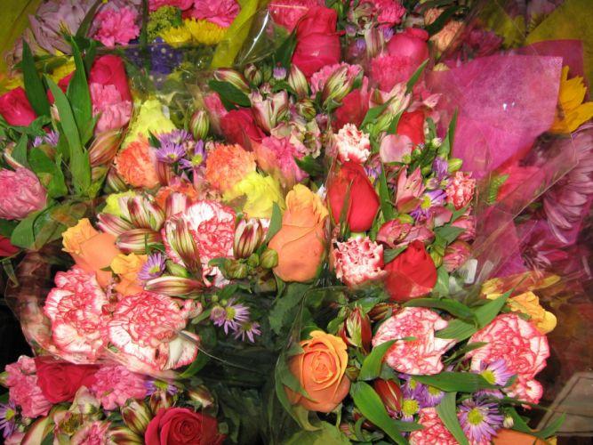 flores colores naturaleza wallpaper