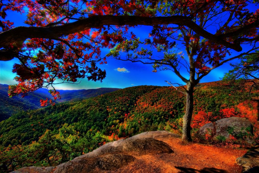 paisaje naturaleza otoA wallpaper