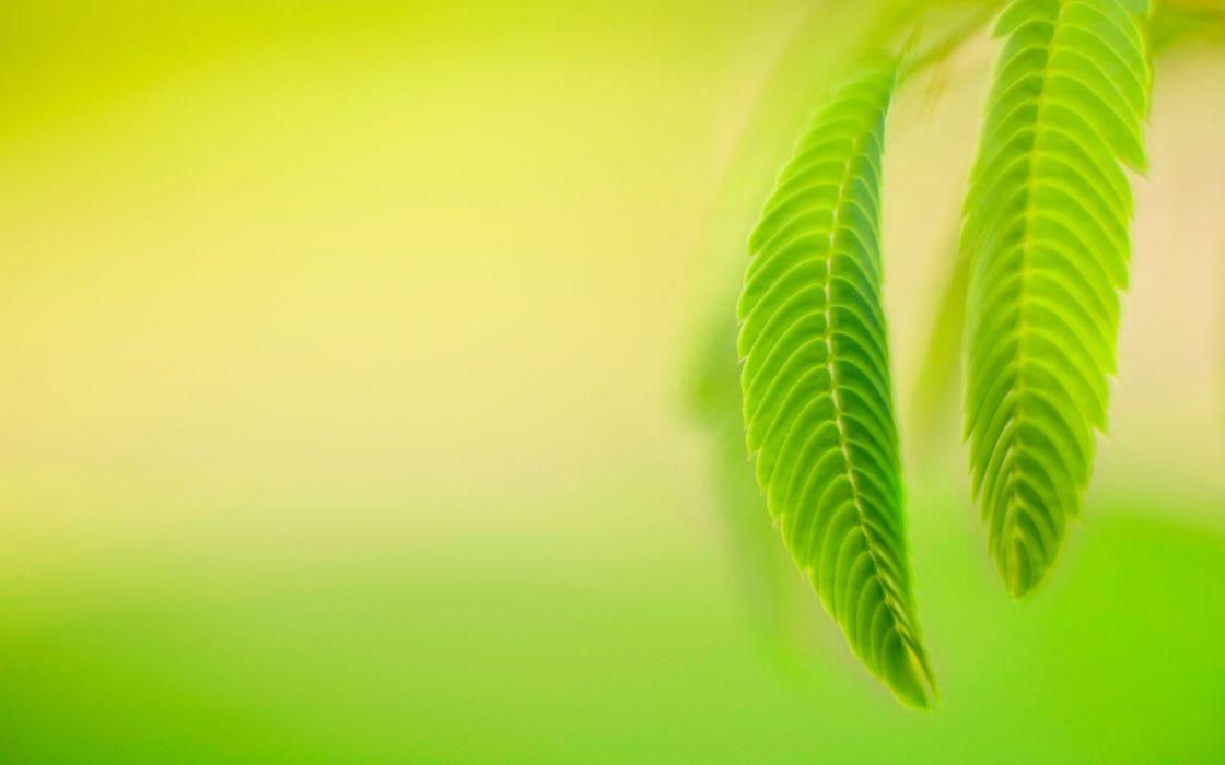 hojas verdes naturaleza wallpaper