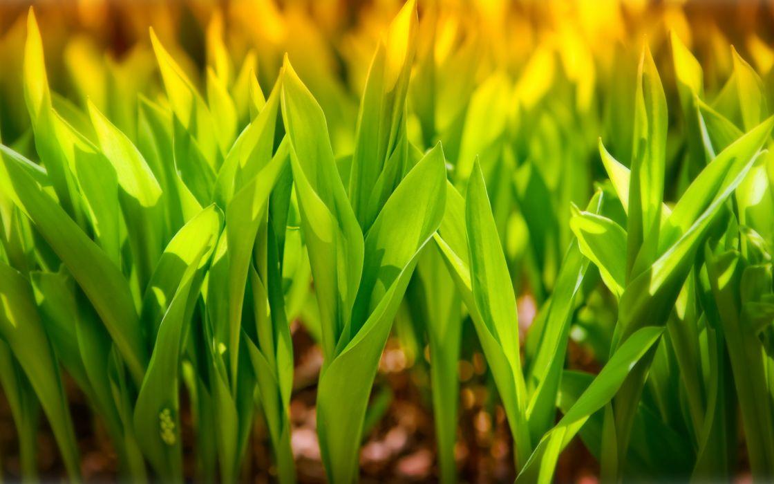 plantas verdes naturaleza wallpaper