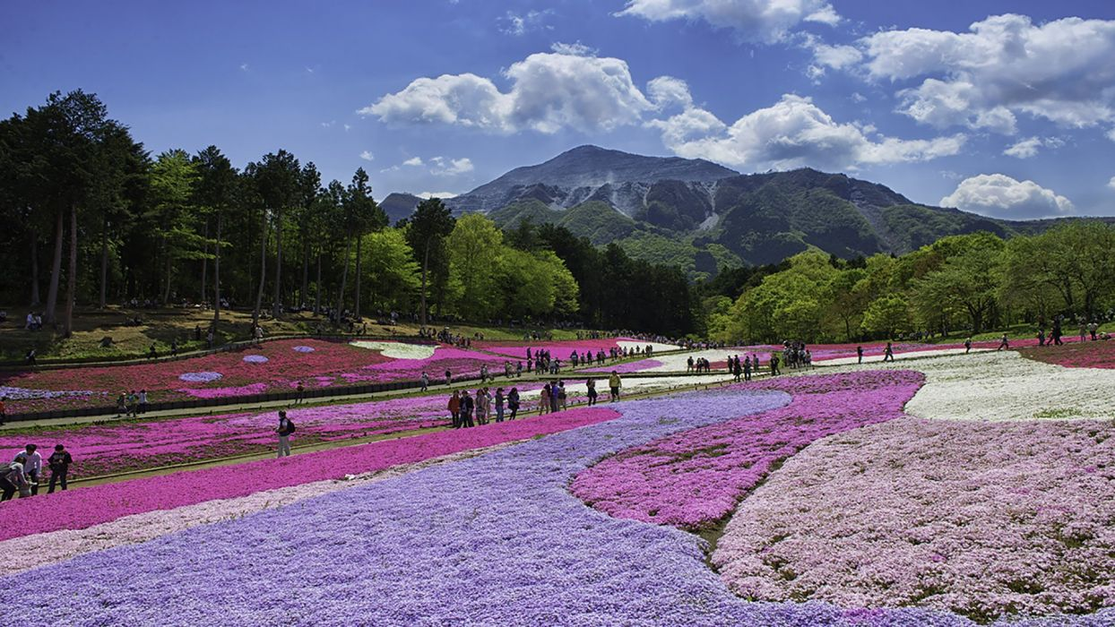 tokyo saitama landscape travel flower wallpaper