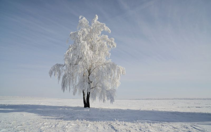 winter snow landscape nature wallpaper