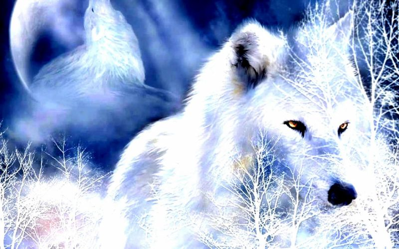 winter snow landscape nature wolf wolves wallpaper