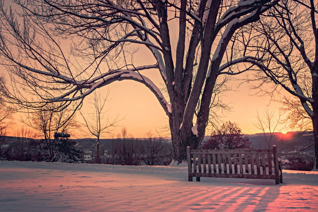 winter snow landscape nature bench wallpaper
