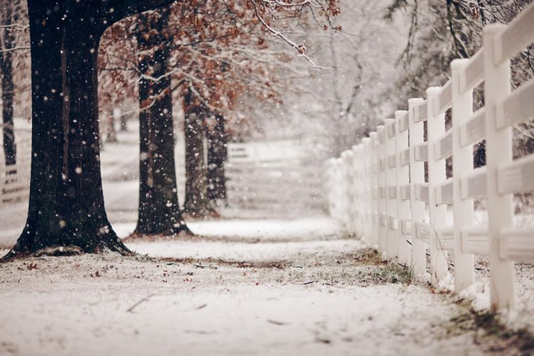 winter snow landscape nature fence wallpaper