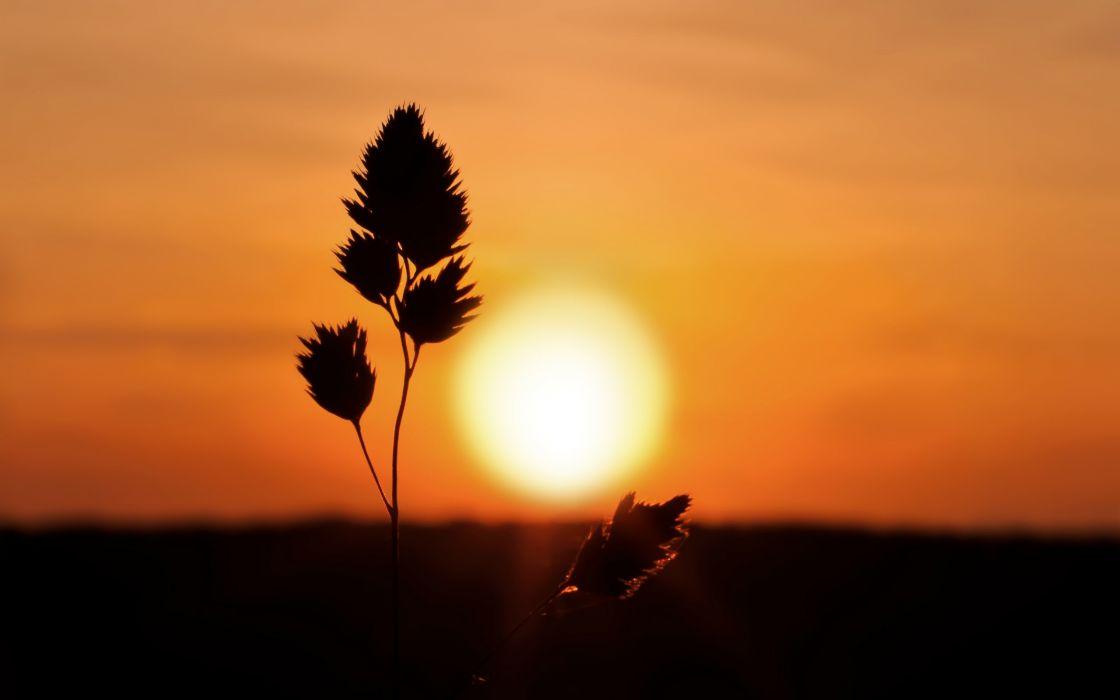 amanecer horizonte sol planta naturaleza wallpaper