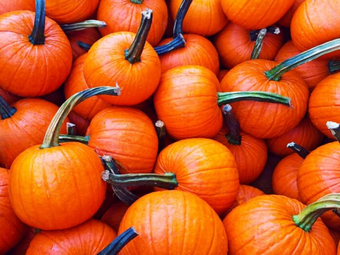 AUTUMN fall landscape nature tree forest leaf leaves pumpkin thanksgiving wallpaper