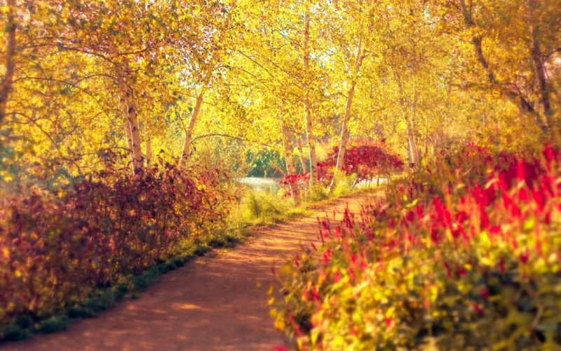 AUTUMN fall landscape nature tree forest leaf leaves path trail wallpaper
