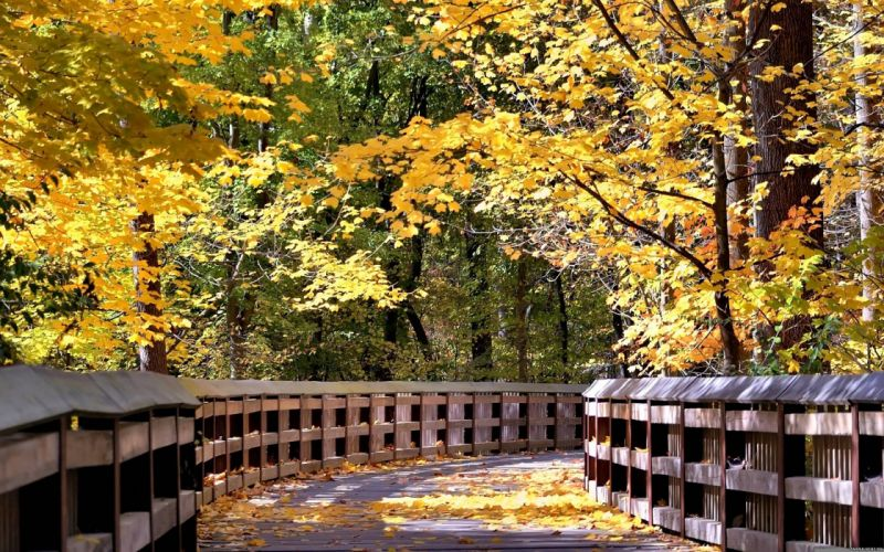 AUTUMN fall landscape nature tree forest leaf leaves bridge wallpaper