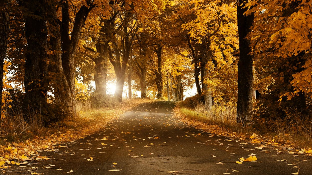 AUTUMN fall landscape nature tree forest leaf leaves road path trail wallpaper