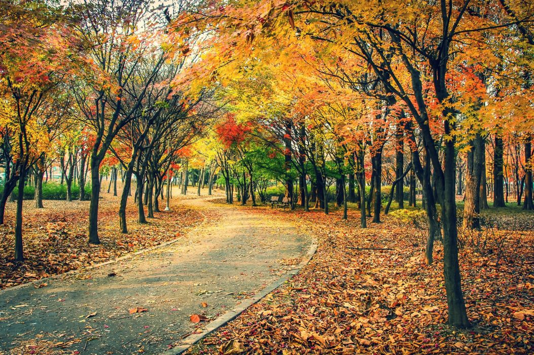 AUTUMN fall landscape nature tree forest leaf leaves path trail road wallpaper