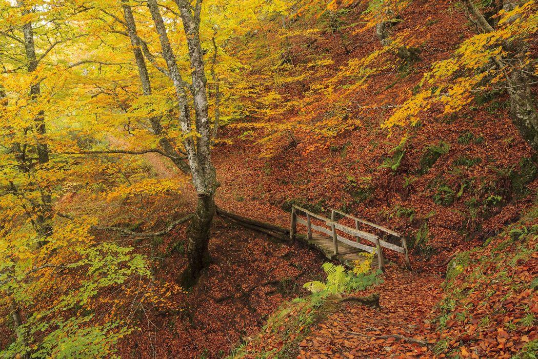 AUTUMN fall landscape nature tree forest leaf leaves path trail road bridge wallpaper