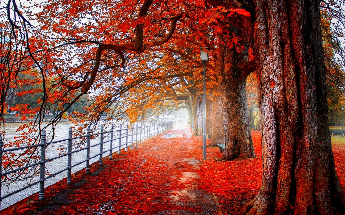 AUTUMN fall landscape nature tree forest leaf leaves wallpaper