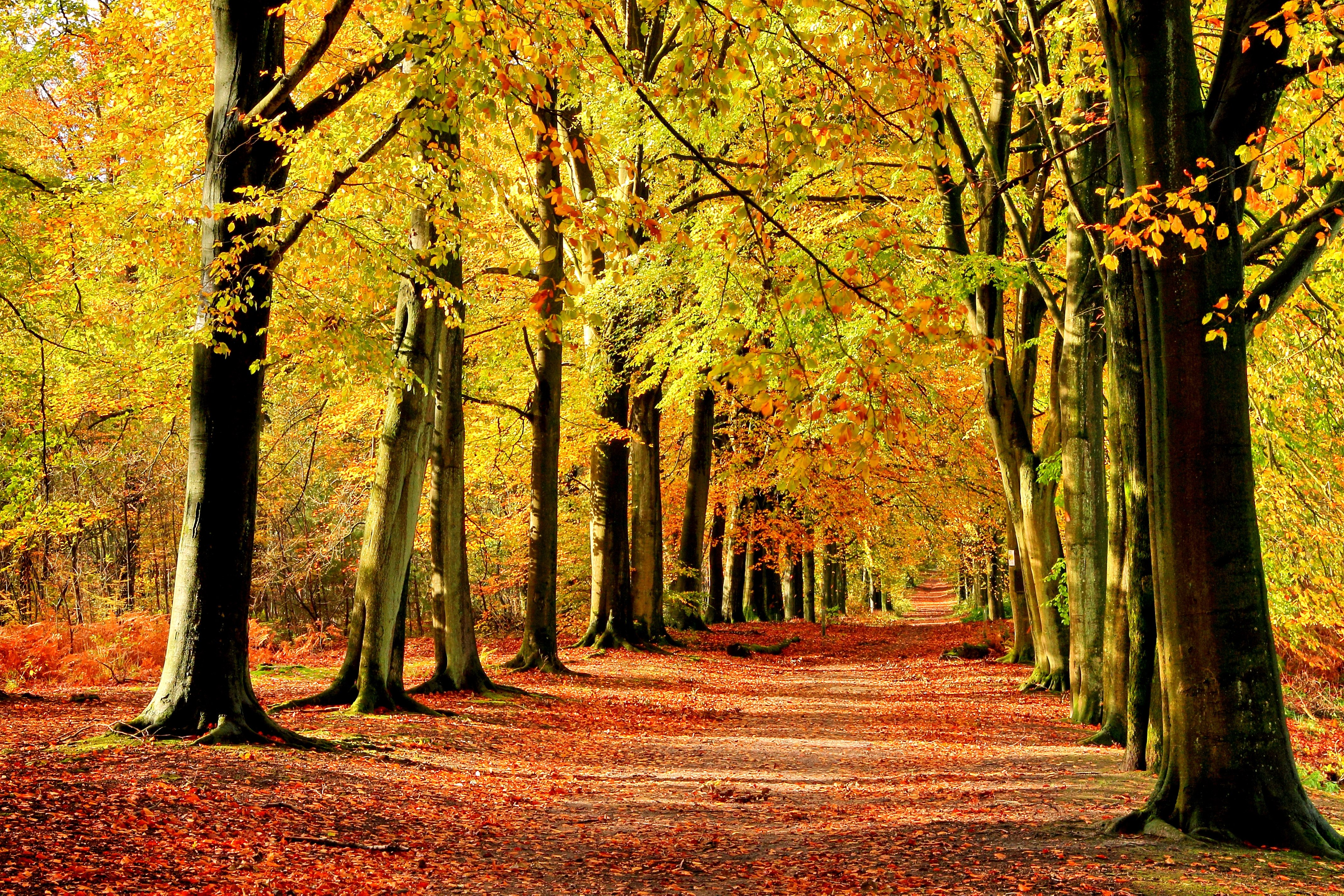 wallpapers for desktop autumn