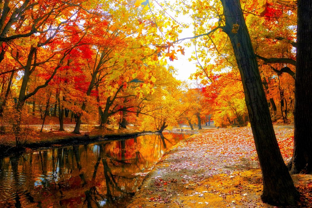 Incroyable AUTUMN Fall Landscape Nature Tree Forest Leaf Leaves Wallpaper