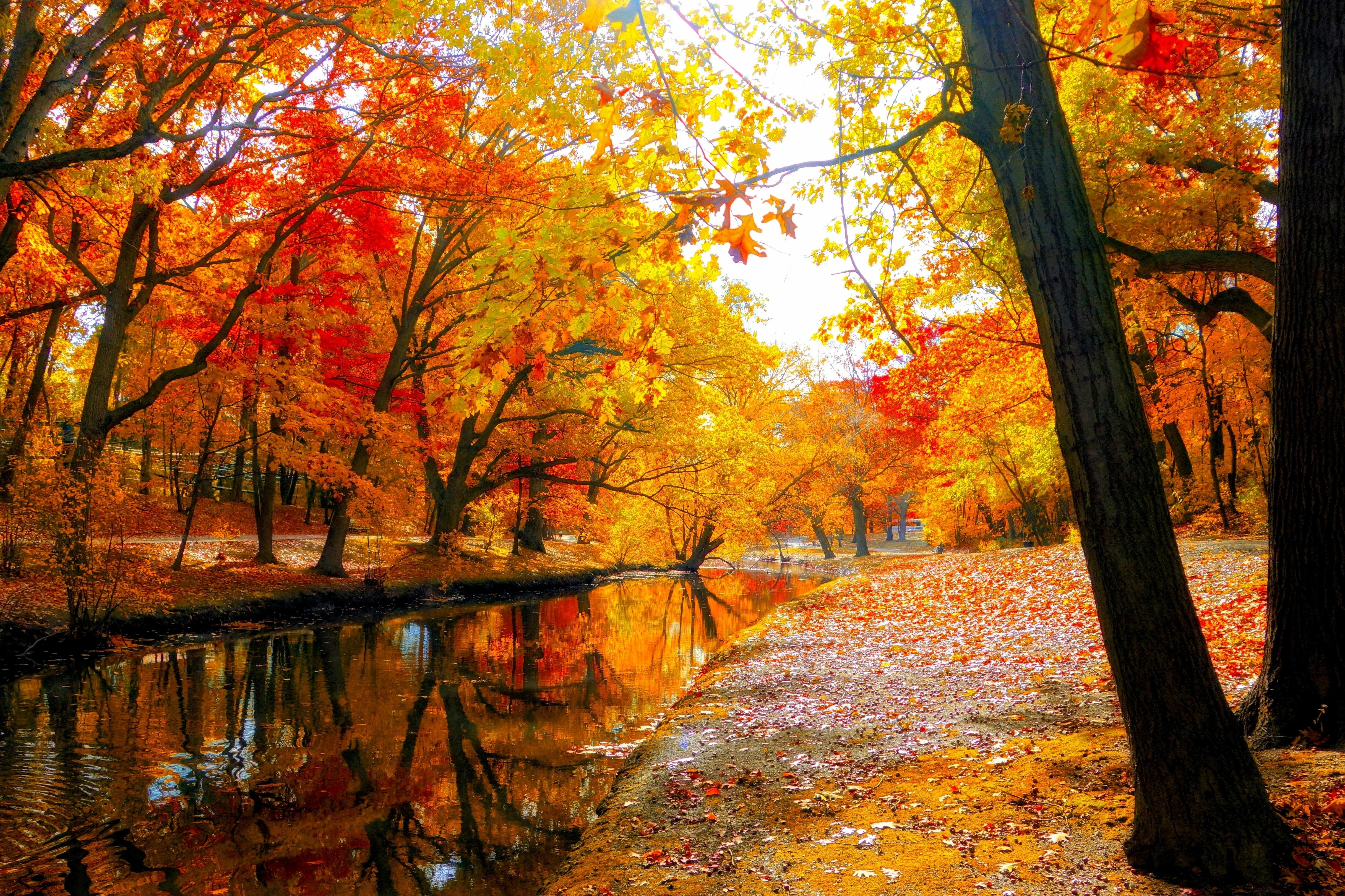 AUTUMN Fall Landscape Nature Tree Forest Leaf Leaves