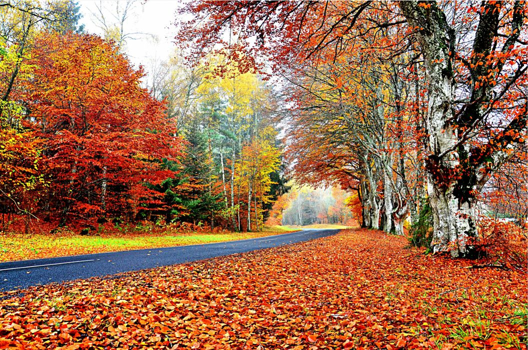 AUTUMN fall landscape nature tree forest leaf leaves fence path trail road wallpaper