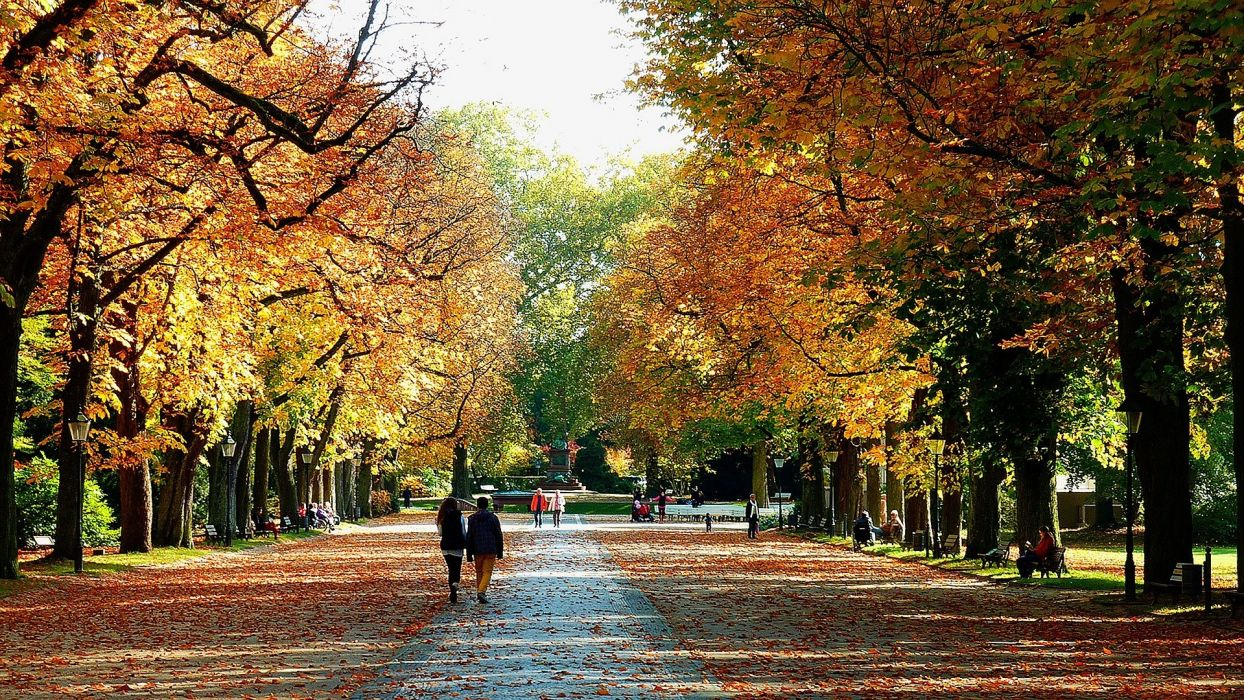 AUTUMN fall landscape nature tree forest leaf leaves path trail people wallpaper