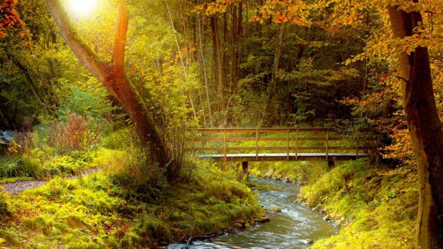 AUTUMN fall landscape nature tree forest leaf leaves path trail bridge wallpaper