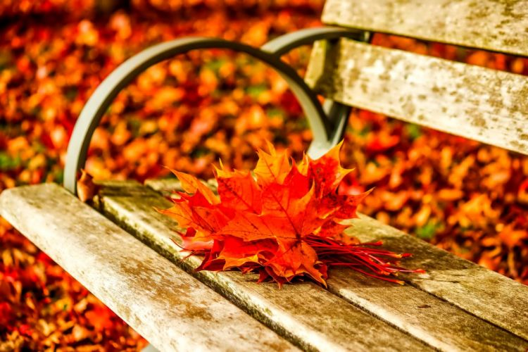 AUTUMN fall landscape nature tree forest leaf leaves bench wallpaper