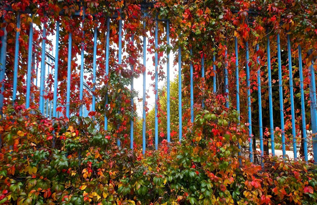 AUTUMN fall landscape nature tree forest leaf leaves fence wallpaper