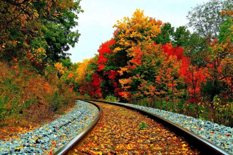 AUTUMN fall landscape nature tree forest leaf leaves path trail train tracks wallpaper
