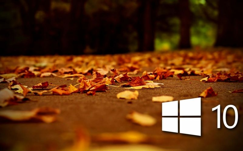 AUTUMN fall landscape nature tree forest leaf leaves windows microsoft wallpaper