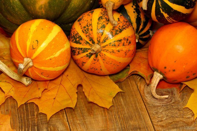 AUTUMN fall landscape nature tree forest leaf leaves pumpkin halloween thanksgiving gouard wallpaper