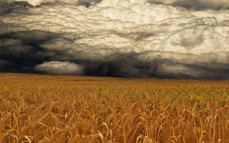 STORM weather rain sky clouds nature landscape wheat grass wallpaper