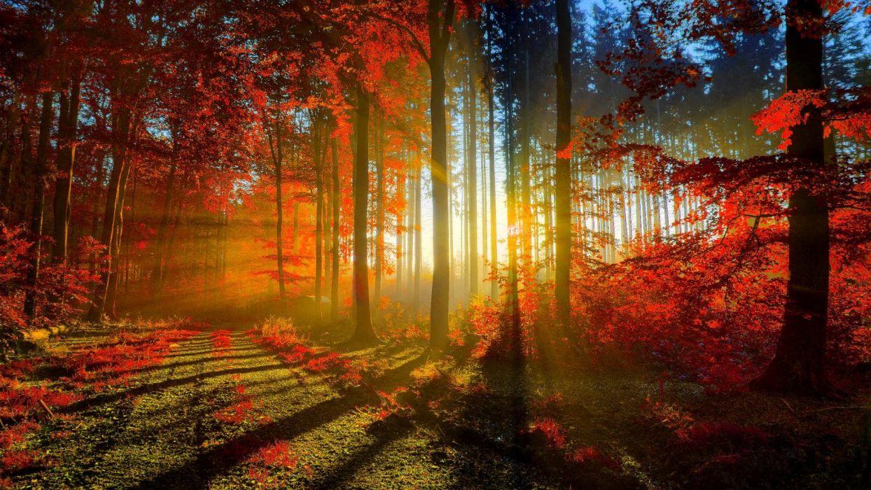 nature sunshine beauty sunset tree forest wallpaper