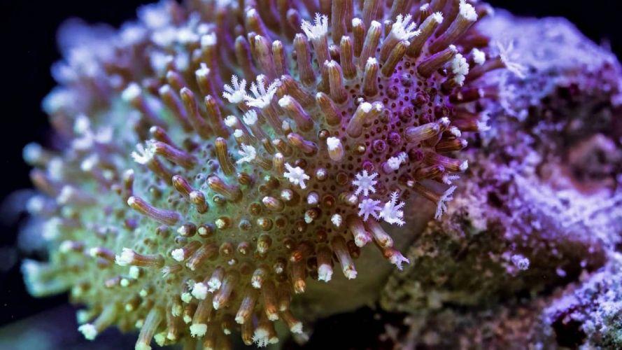 SEA LIFE underwater sea ocean art artwork 3-d psychedelic coral sealife wallpaper