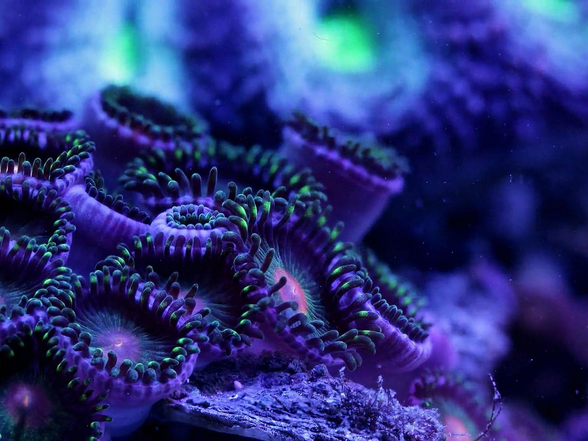 SEA LIFE underwater sea ocean art artwork 3-d psychedelic ...