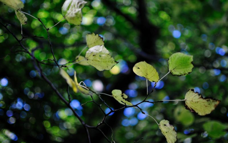 leaves foliage trees branches leaves bokeh wallpaper