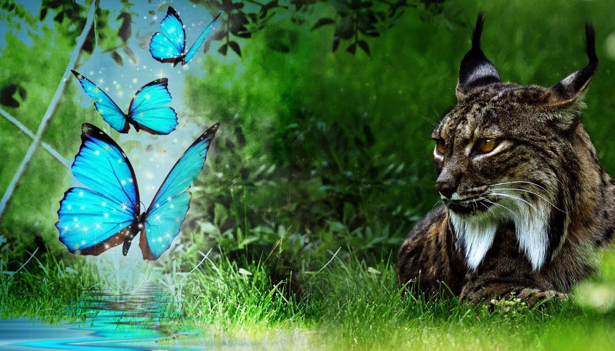 Wonderful Wallpaper Cat Butterfly - 9cd14ab24a738f9233789a7bdb690f4a-700  Pic_583823 .jpg