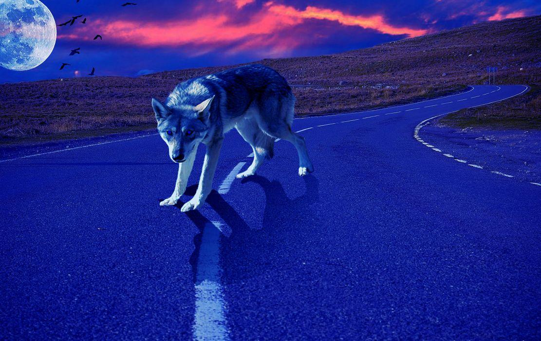 sunset planet road wolf wallpaper