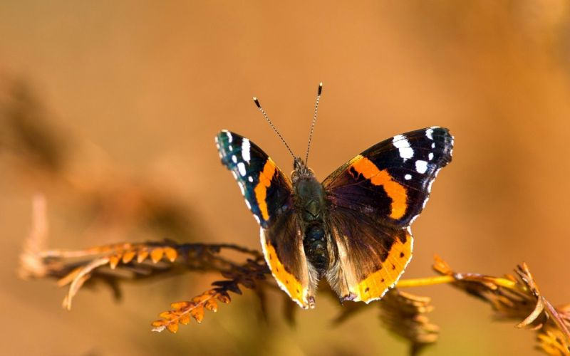Butterfly twig background close-up wallpaper