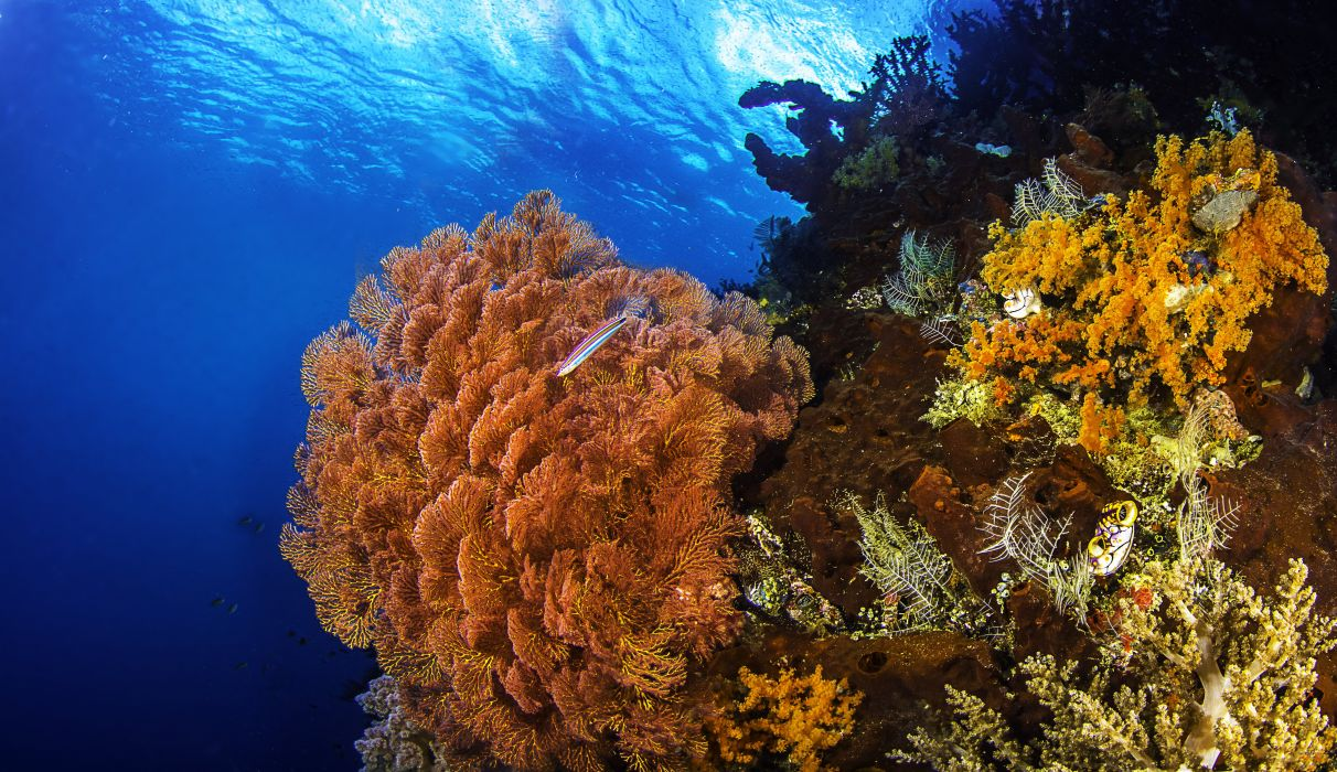 Coral reefs sea seabed fish nature wallpaper