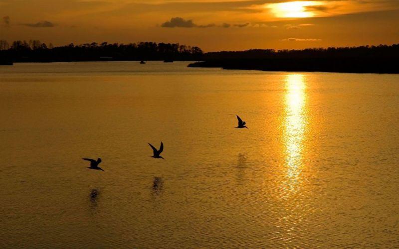 flight over water sunset or sunrise wallpaper