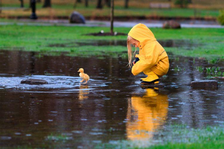 baby duck rain park pond waterproof cute love nature animals mood wallpaper