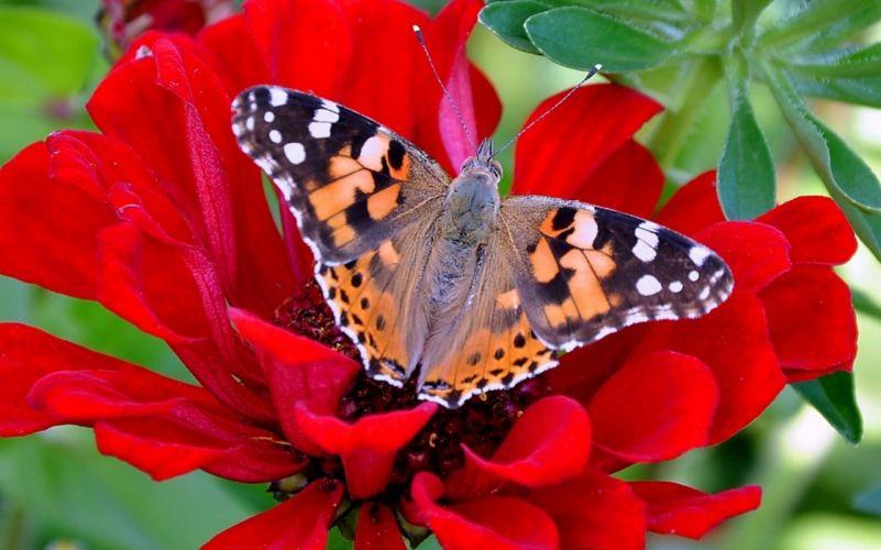 butterfly flower leaf beauty of nature wallpaper
