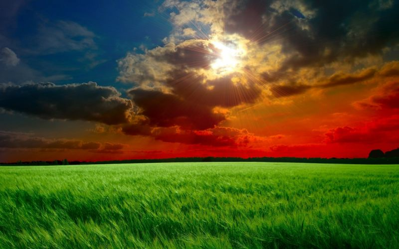 rays ears clouds sunset sky sun field cloud wallpaper