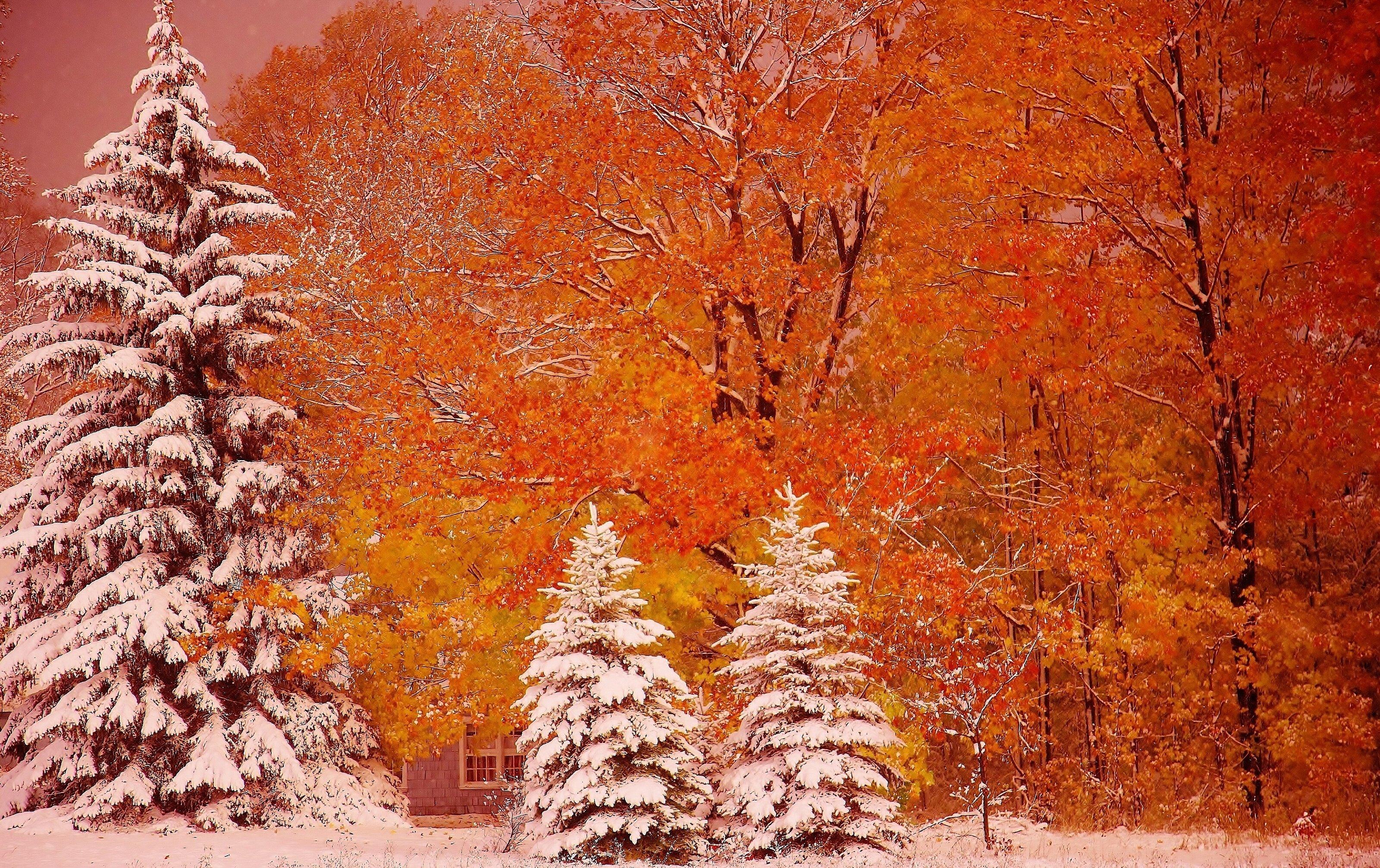 осень первый снег обои рабочего стола № 637031  скачать