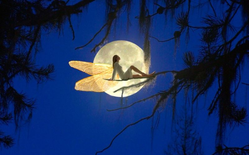 night moon forest fairy wallpaper
