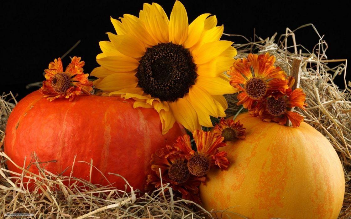 sunflower pumpkin autumn wallpaper