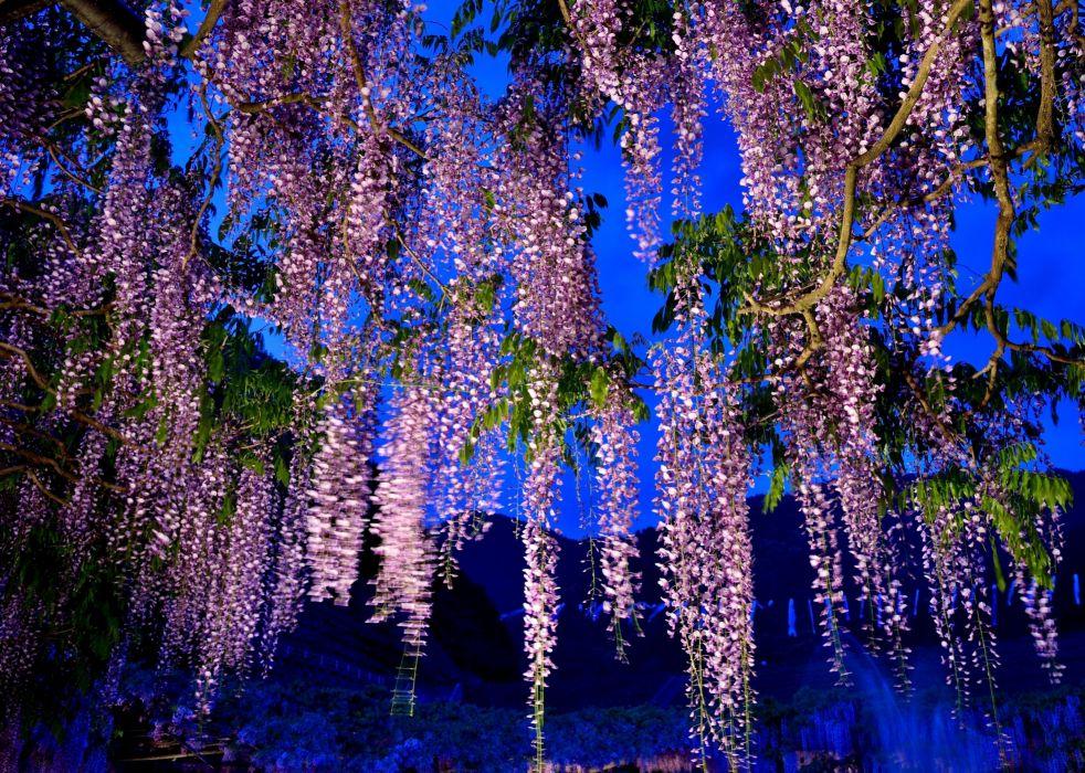 night tree branch flowers wallpaper