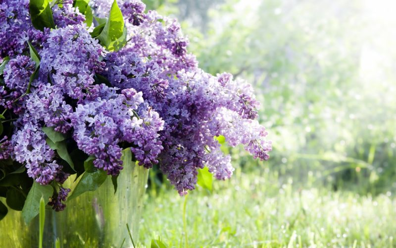 spring bucket twigs flowers lilac wallpaper