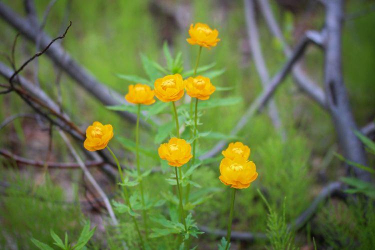 hot summer nature flowers beautiful tundra Taimyr blur wallpaper