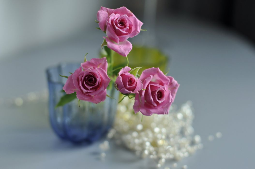 rose buds bokeh wallpaper